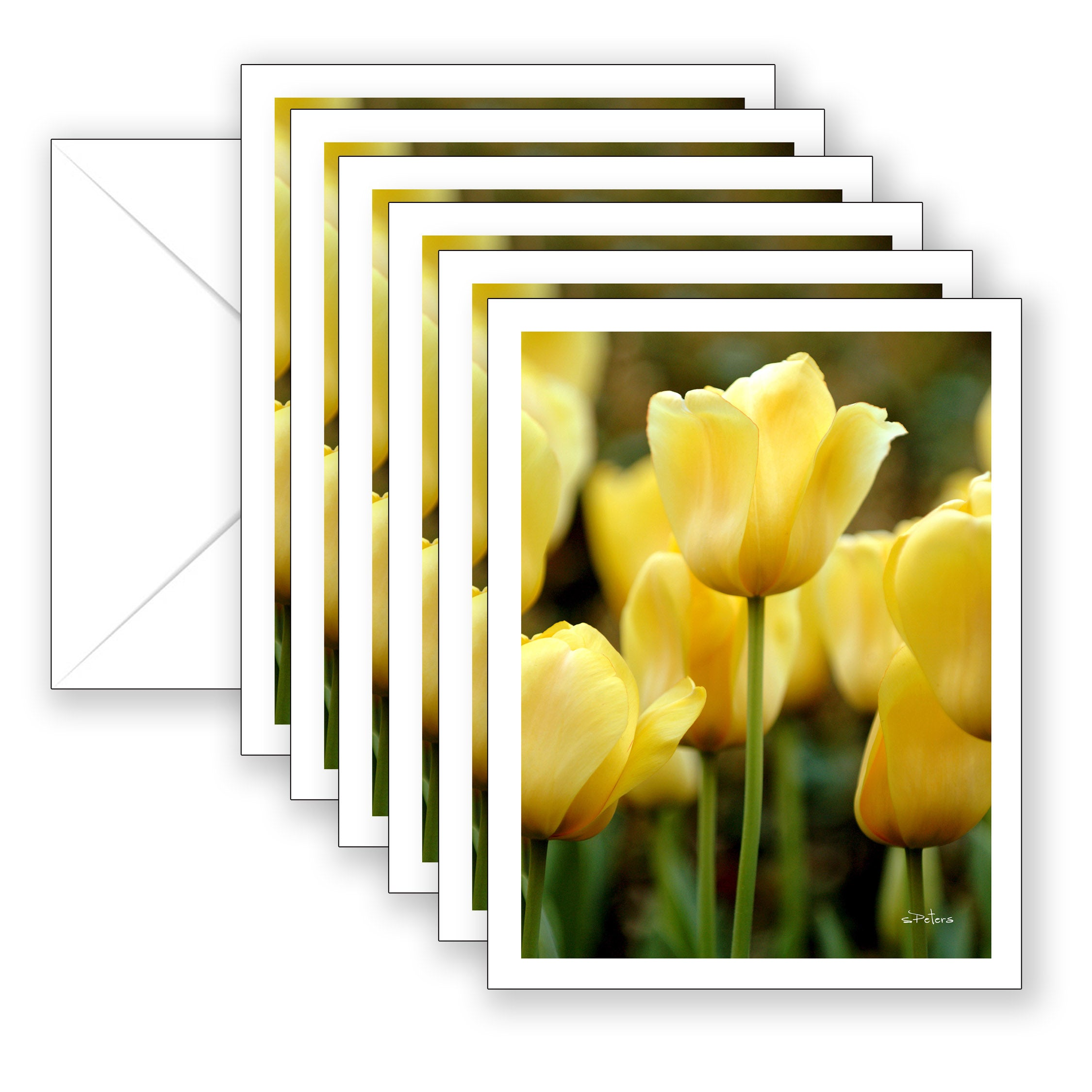 Golden Oxford Tulips Boxed Notecard Collection