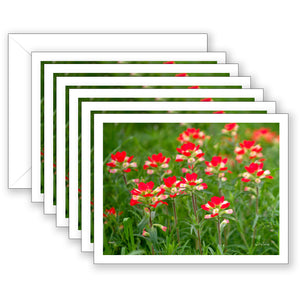 Indian Paintbrush Boxed Notecard Collection