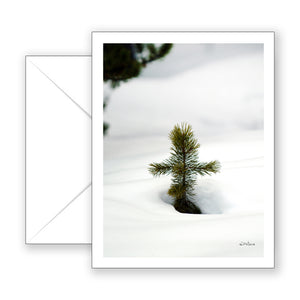 Pine Cross Notecard