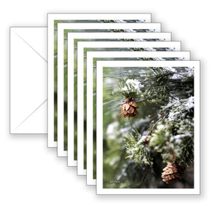 Winter Wonder Boxed Notecard Collection