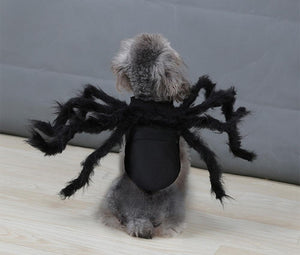 Spider Pet Halloween Costume LuminousUnicorn