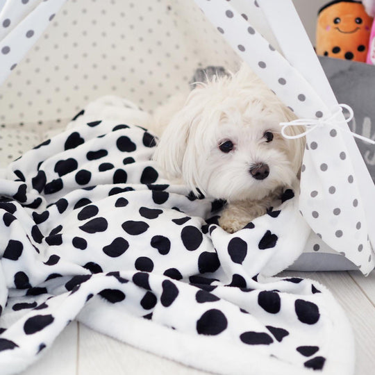 Pet Blanket - Go Potty For Dotty