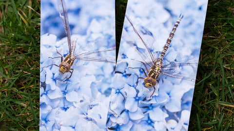 Vibrant dragonfly bookmarks by GS Creative Photography Gifts