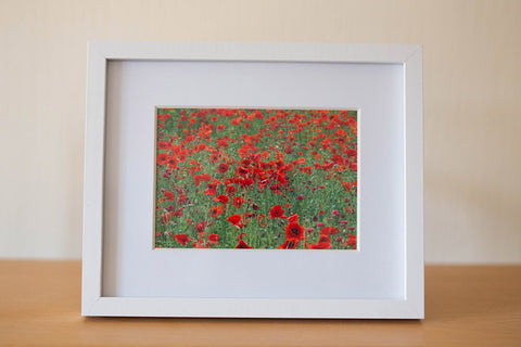 Featuring our vibrant poppy field framed print by GS Creative Photography Gifts