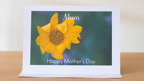 Mother's Day Ladybird card by GS Creative Photography Gifts