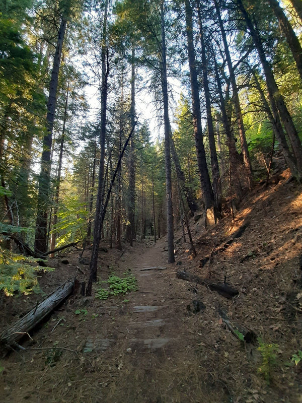 A Beaten Path Worth Taking – Trestle Trail, Grizzly Flats, El Dorado County