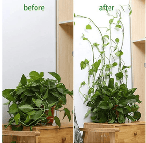 Plant Climbing Wall Fixtures
