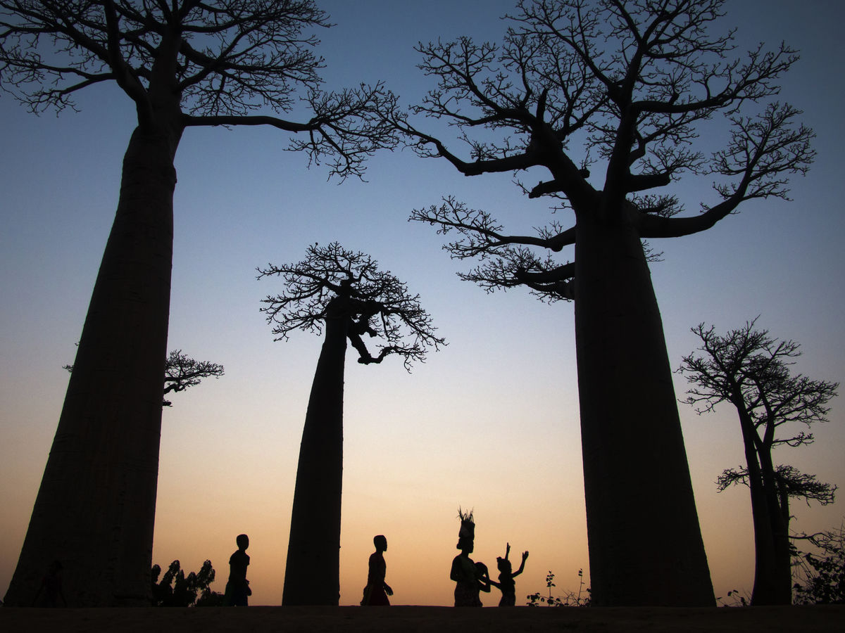 Silhuette - Sunset in Africa - Baobab Avenue - Madagascar - 2018