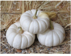 Pumpkins decorative mini white boos
