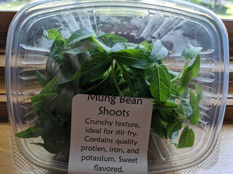Mung Bean Shoots