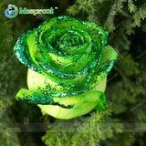 Super Rare Rainbow Rose Seeds - 100 Seed Pack