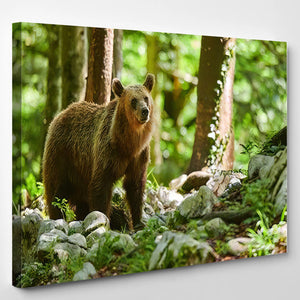 Wild Brown Bear Ursus Arctos Close 1 - Bear Animals Canvas Art Wall Decor