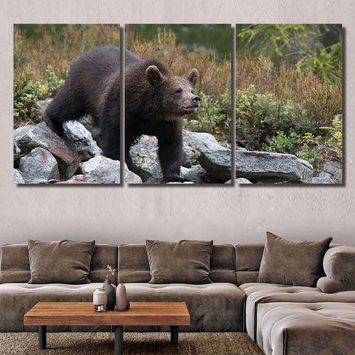 Young Broown Bear Ursus Arctos Looking 2 - Bear Animals Canvas Art Wall Decor