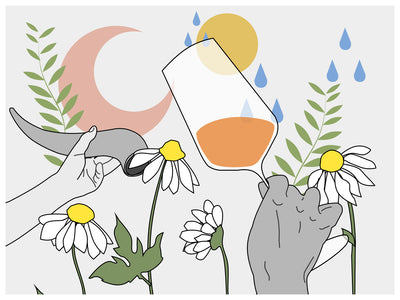 A Brief Guide to Biodynamic Wine