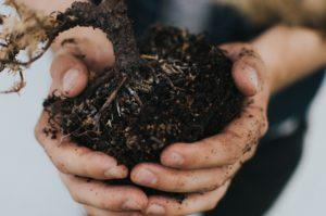 hands holding soil and roots while gardening