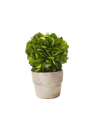 Serene Spaces Living Small Boxwood Ball Topiary in Pot, Sold Individually and Measures  2.25 inches in Diameter