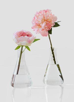 "Serene Spaces Living Set of 2 Large Flask Bud Vases, Transparent Glass Vases, Each Measures 7"" Tall and 4"" Diameter"