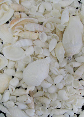 White Mixed Shells