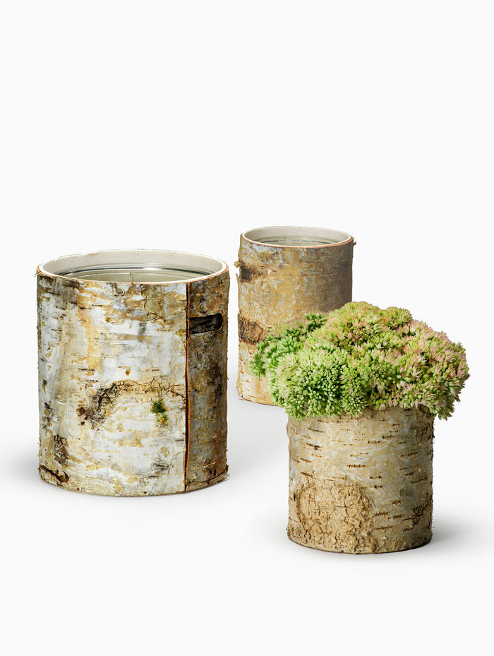White Birch Cylinder Vases