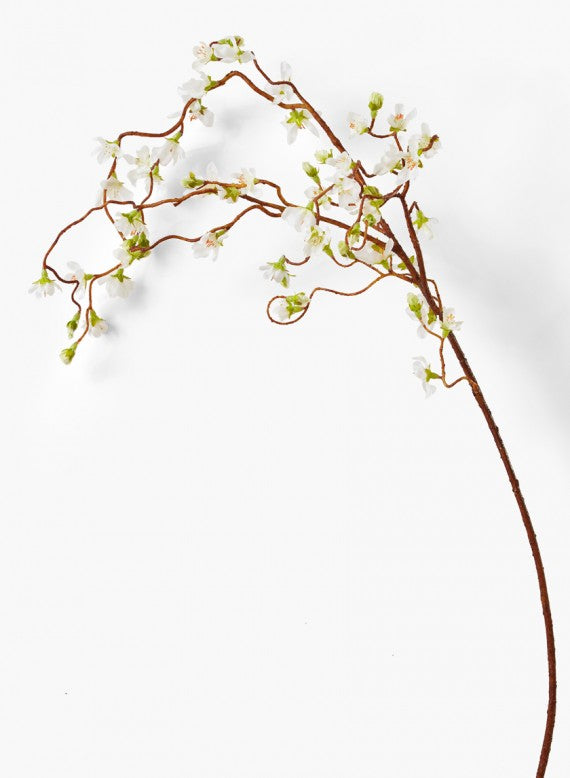 Weeping Cherry Blossom Branch