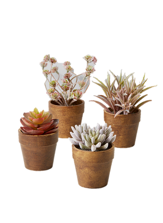 Multi-Colored Succulents in Gold-Brown Paper Mache Pots, Set of 4, Ideal for Plant Display at Home or in a Store Window