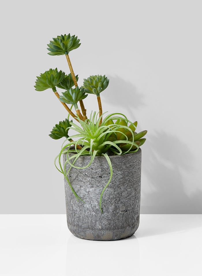 Artificial Mixed Succulents in Grey Round Cement Pot, Ideal for Desk, Counter or Hotel Lobby