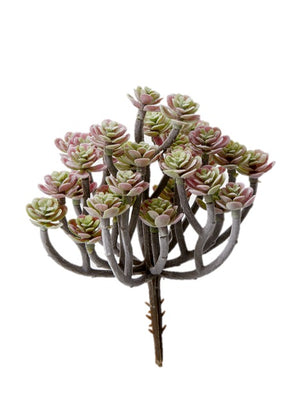 Multicolor Mini Succulent Tree