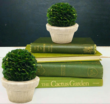 Serene Spaces Living Preserved Boxwood Ball Topiary in a Pot, In Various Sizes