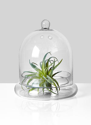 Serene Spaces Living Glass Cloche, Ideal as a Terrarium 2 Sizes Available