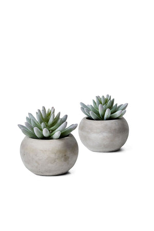 "Serene Spaces Living Set of 2 Flocked Finger Succulent In Cement Pot, 4"" D x 4"" H"