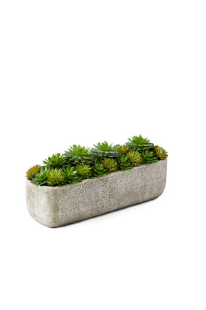 "Serene Spaces Living Succulent Mix in Rectangular Planter, 11.5"" L x 3"" W x 5"" H"