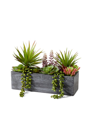 "Serene Spaces Living Mixed Succulent in Rectangle Planter, 12"" L x 4.5"" W x 9"" H"