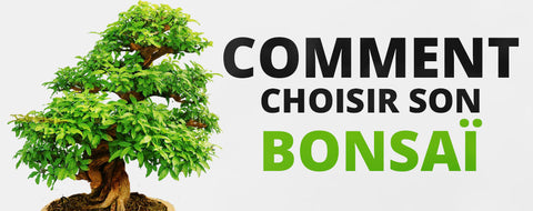 Comment choisir son bonsai