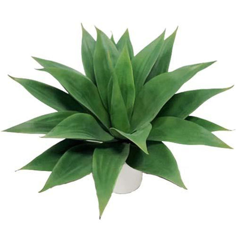 agave artificielle
