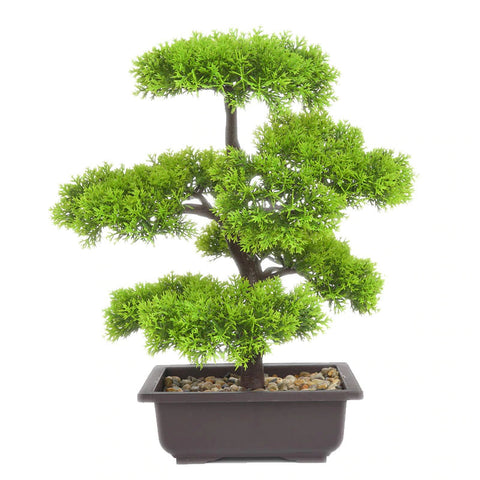 bonsai conifere interieur