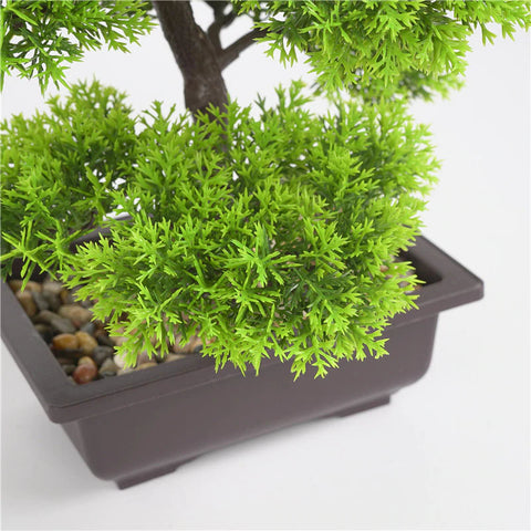bonsai conifere vendita