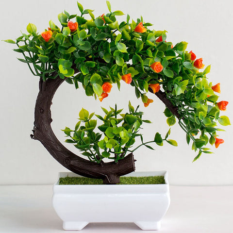 bonsai flamboyant