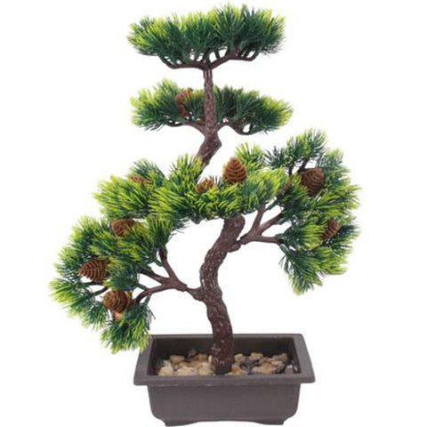 bonsai pomme de pin
