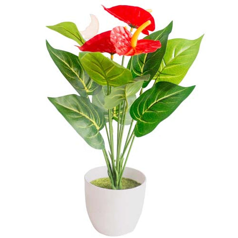 bouquet anthurium