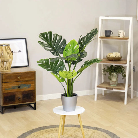 monstera plante exterieur