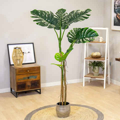 monstera plante interieur