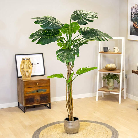 monstera variegata achat