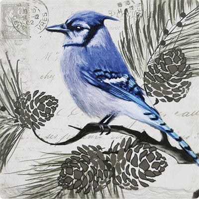 Blue Jay on a Pine Tree, Beverage Coaster (4)