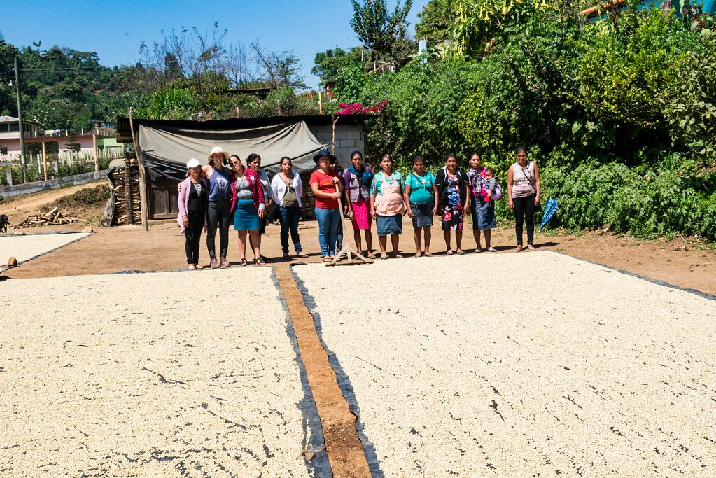 Guatemalan coffee roasters spreading beans for drying | Cascadia Coffee Roasters