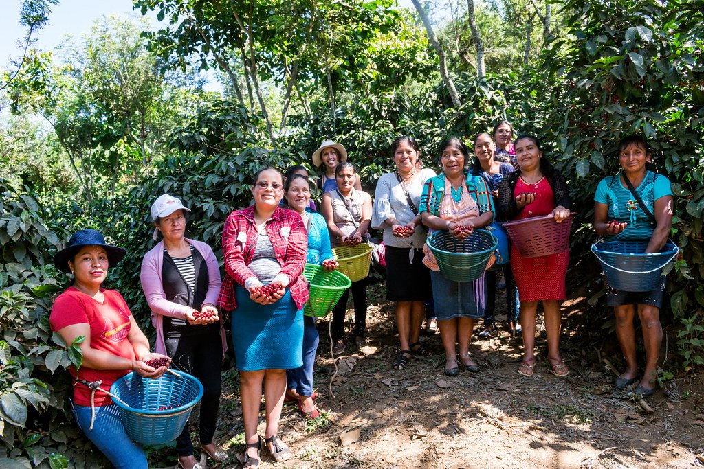 Guatemalan coffee roasters showing recently harvested coffee beans | Cascadia Coffee Roasters