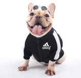 French Bulldog Adidog Tracksuit Top/Coat