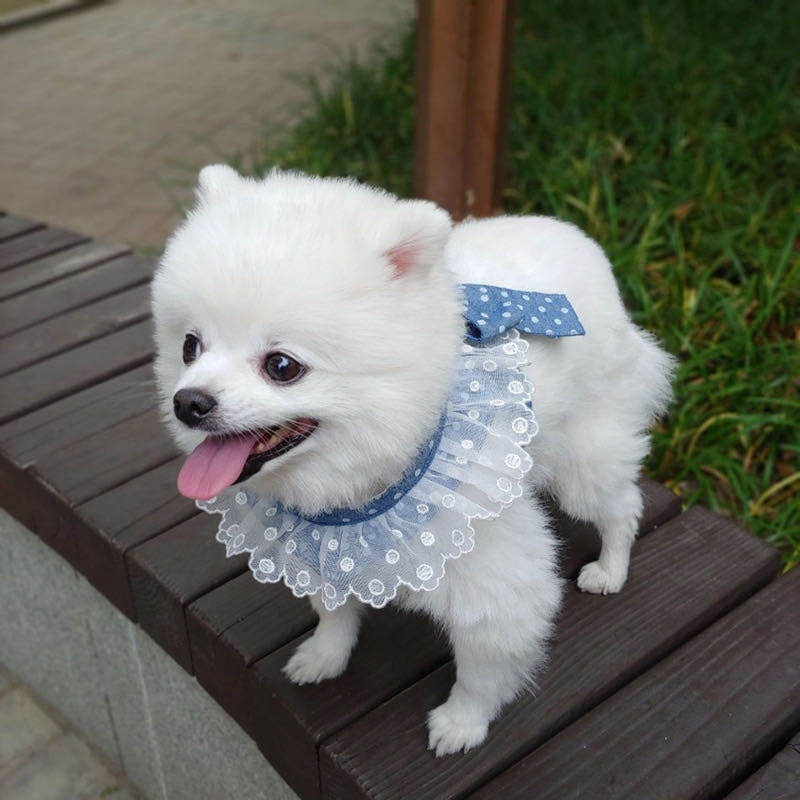 Sweet Bow Dog Harness