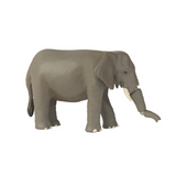 Elefante | ANIA | RocketBaby.it
