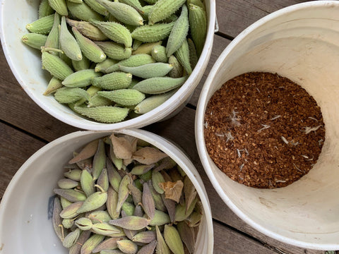 milkweed pods and seed in separate buckets.