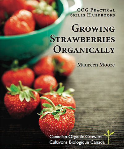 Growing Strawberries Organically